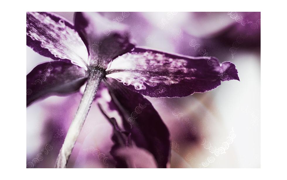 flower_art #44 - für Maike