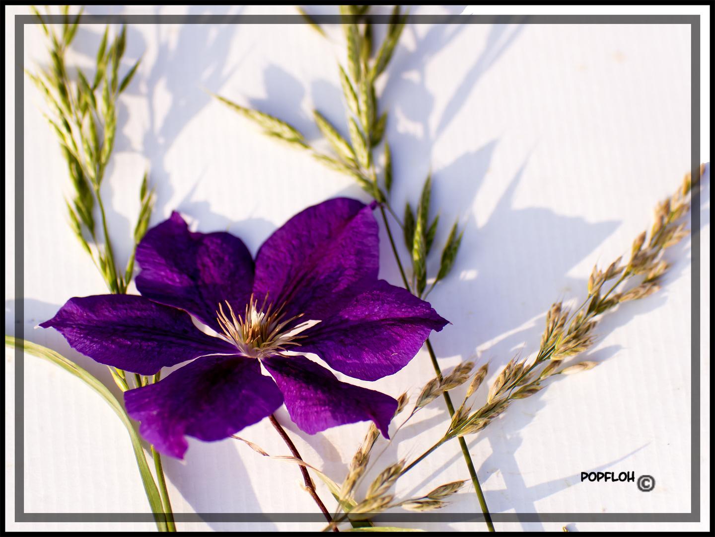 flowerdreams