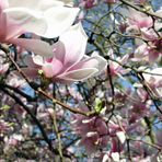 flowered life