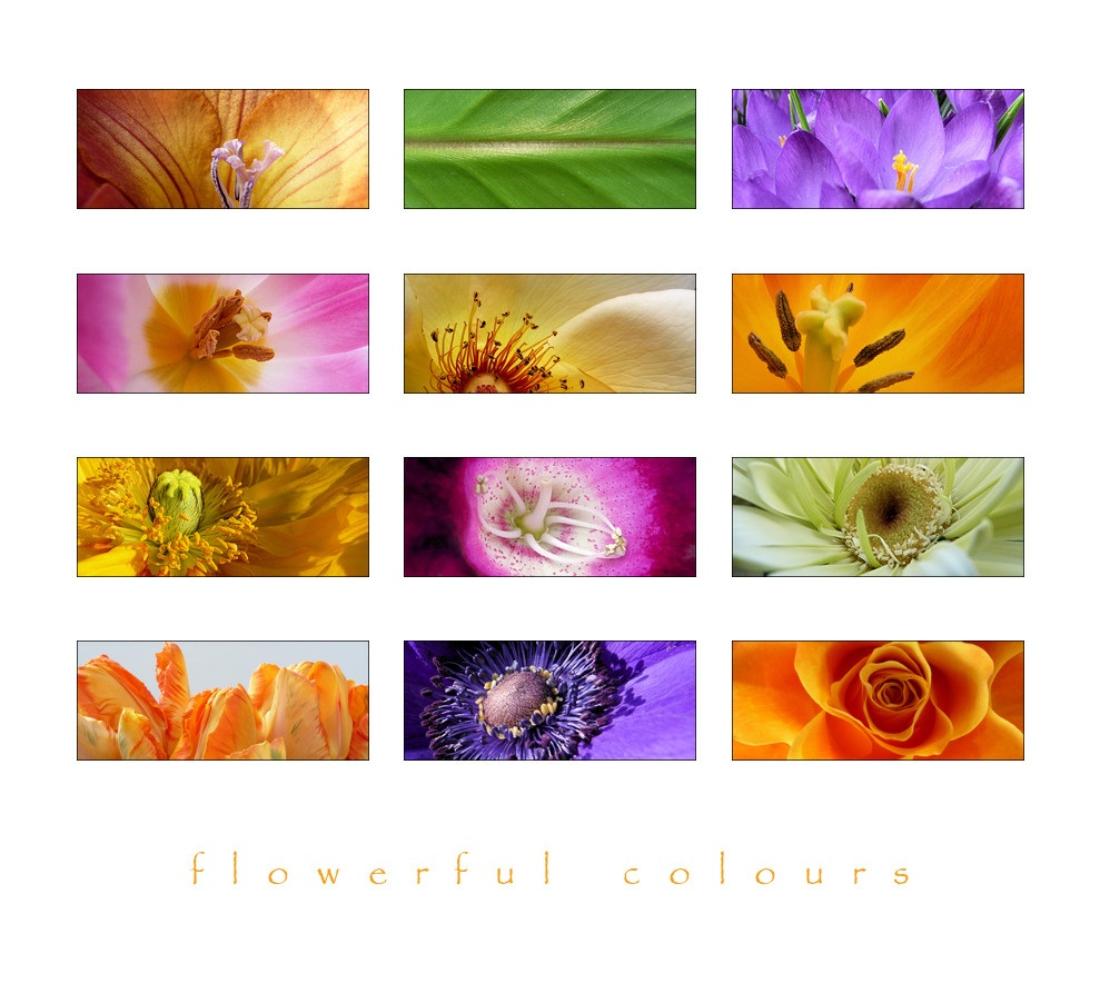 . Flowerful colours .