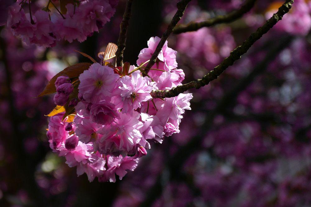 ... flowering trees one of my favorite things