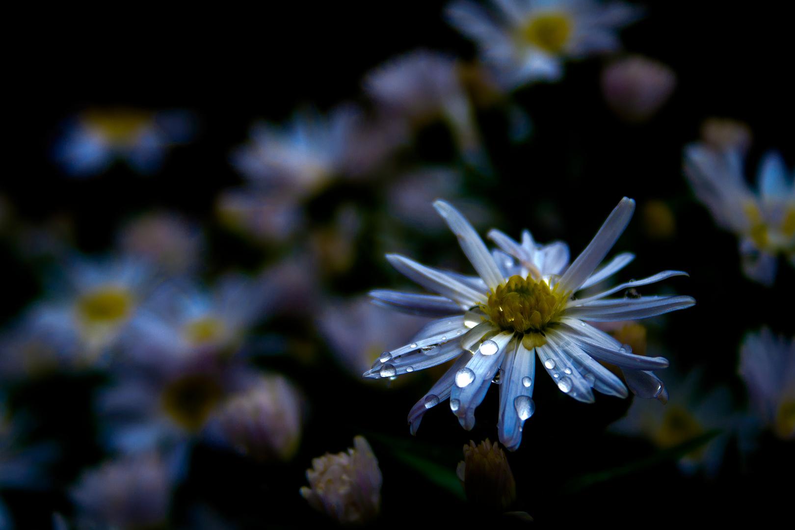 FlowerNight.