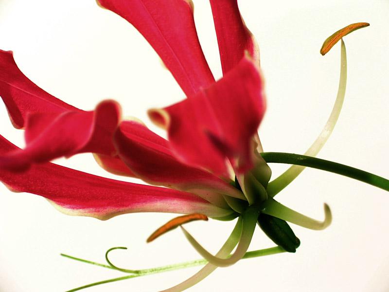 flowerpower 03