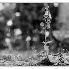 Flowerpower - 2