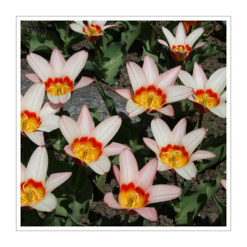 Flowerpower 3/3