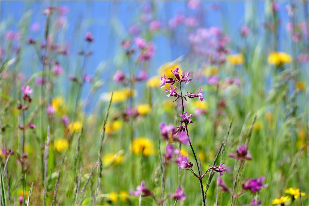 flowerpower...