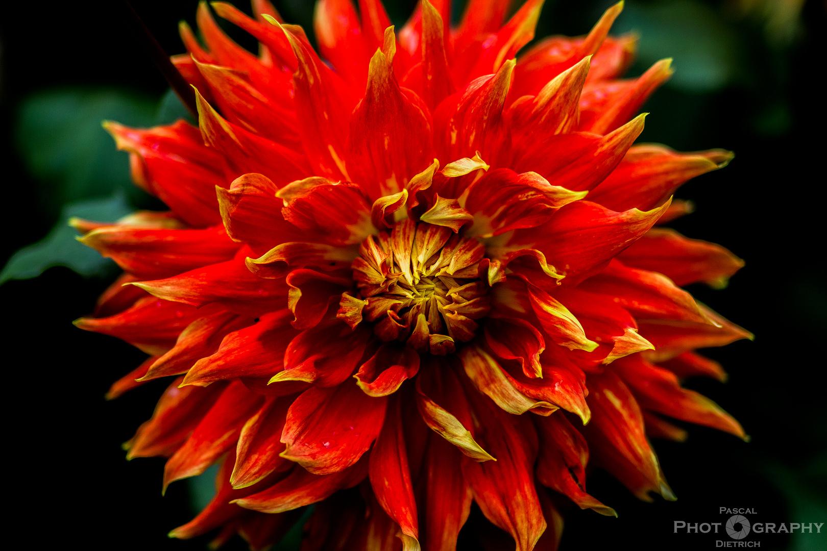 Flowerpower!