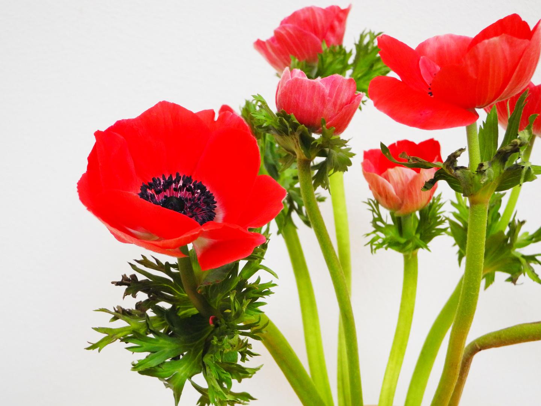 Flowerpower I