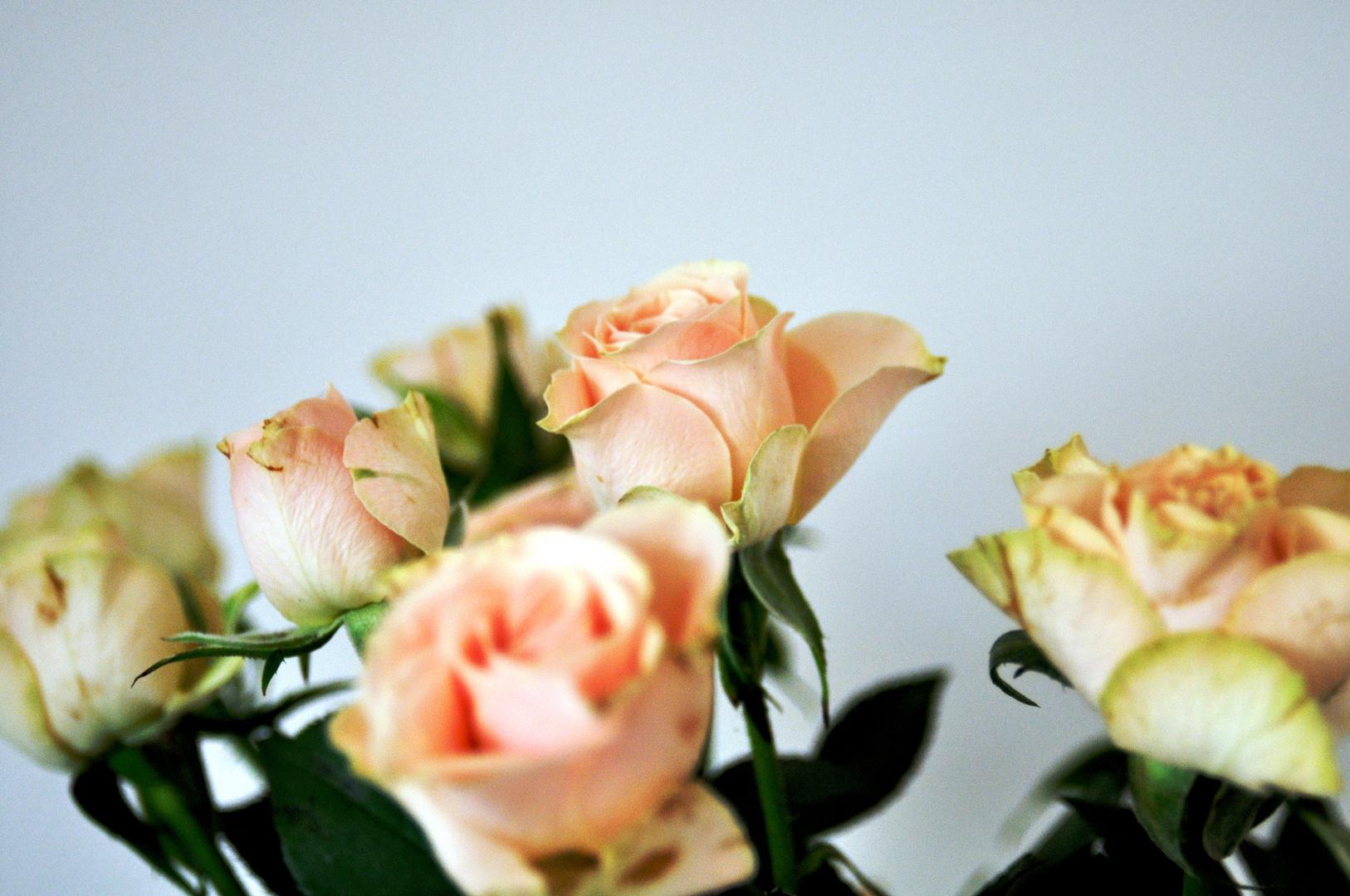 Flowerpower III
