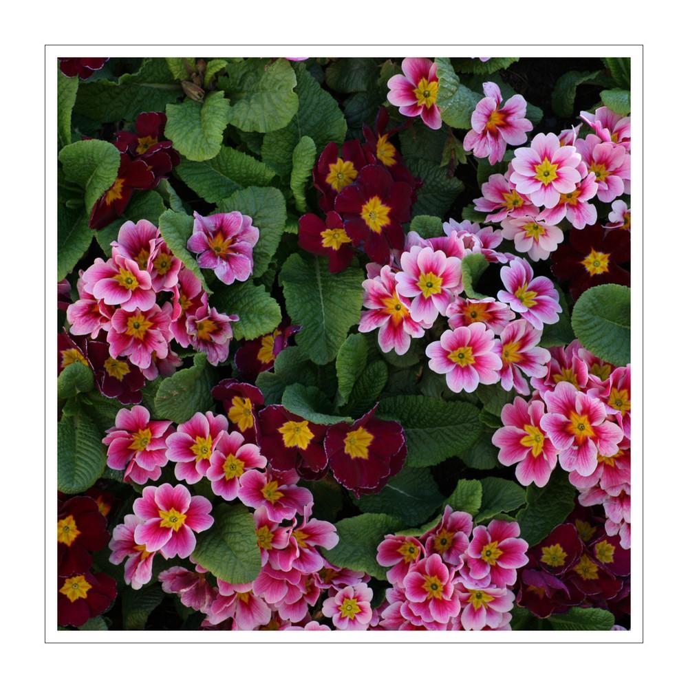 flowerpower1/3