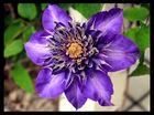 FlowerPower_2