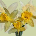 flowers ( 1 ) - Osterglocken