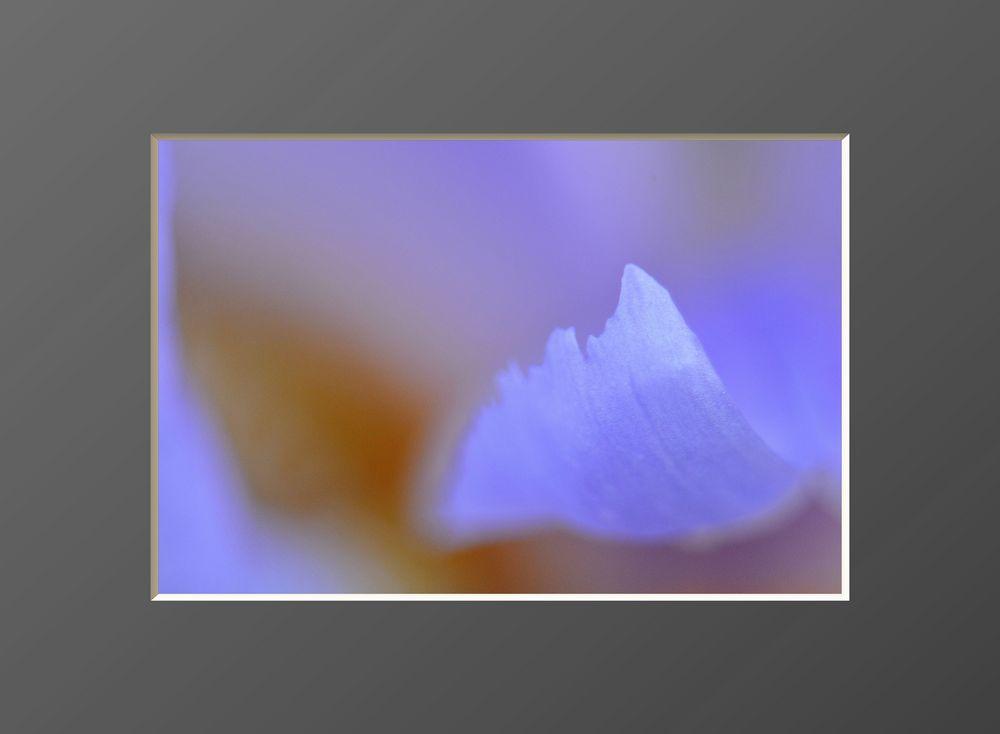 Flowers #13