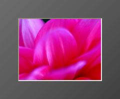 Flowers #16