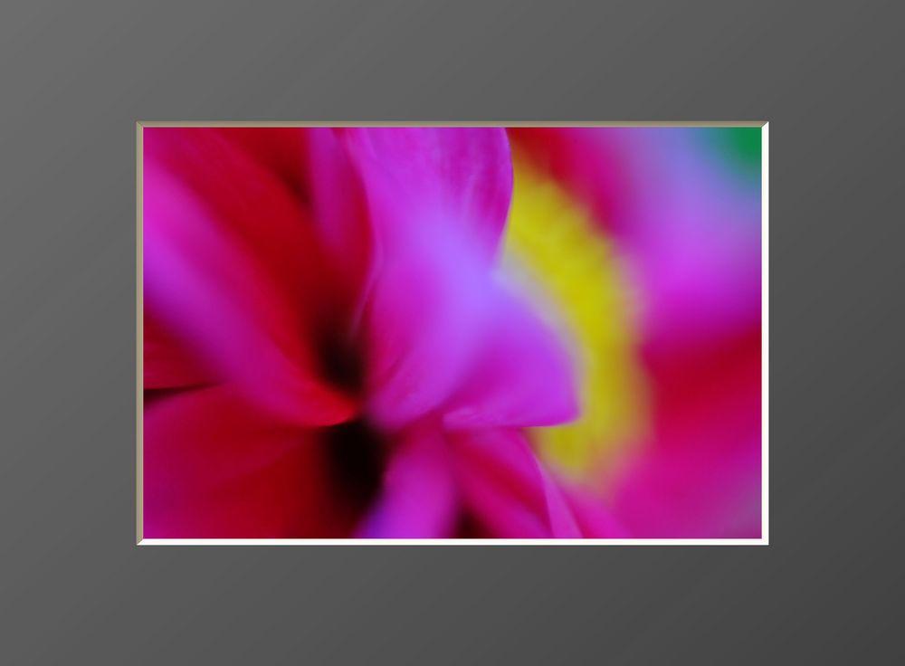 Flowers #17