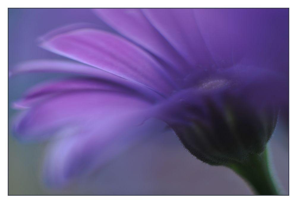 Flowers #18