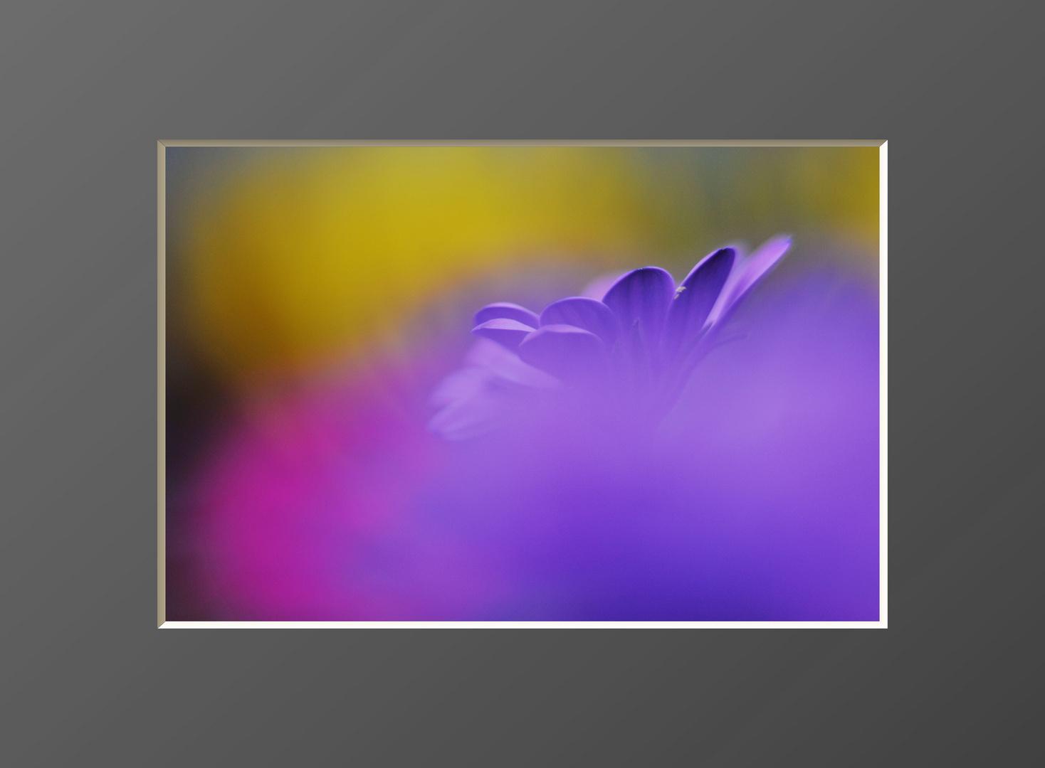 Flowers # 5