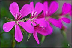 < Flowers >