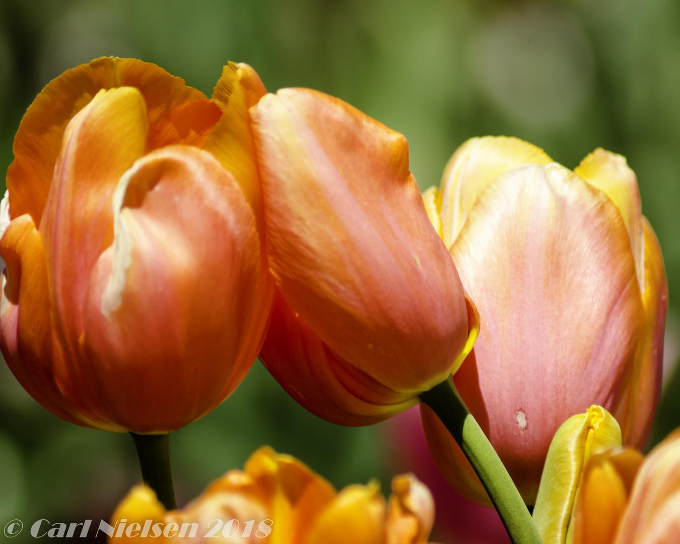 flowers-7