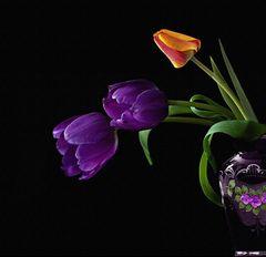 Flowers 7...