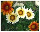 .flowers..