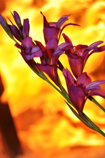 Flowers and fire for you