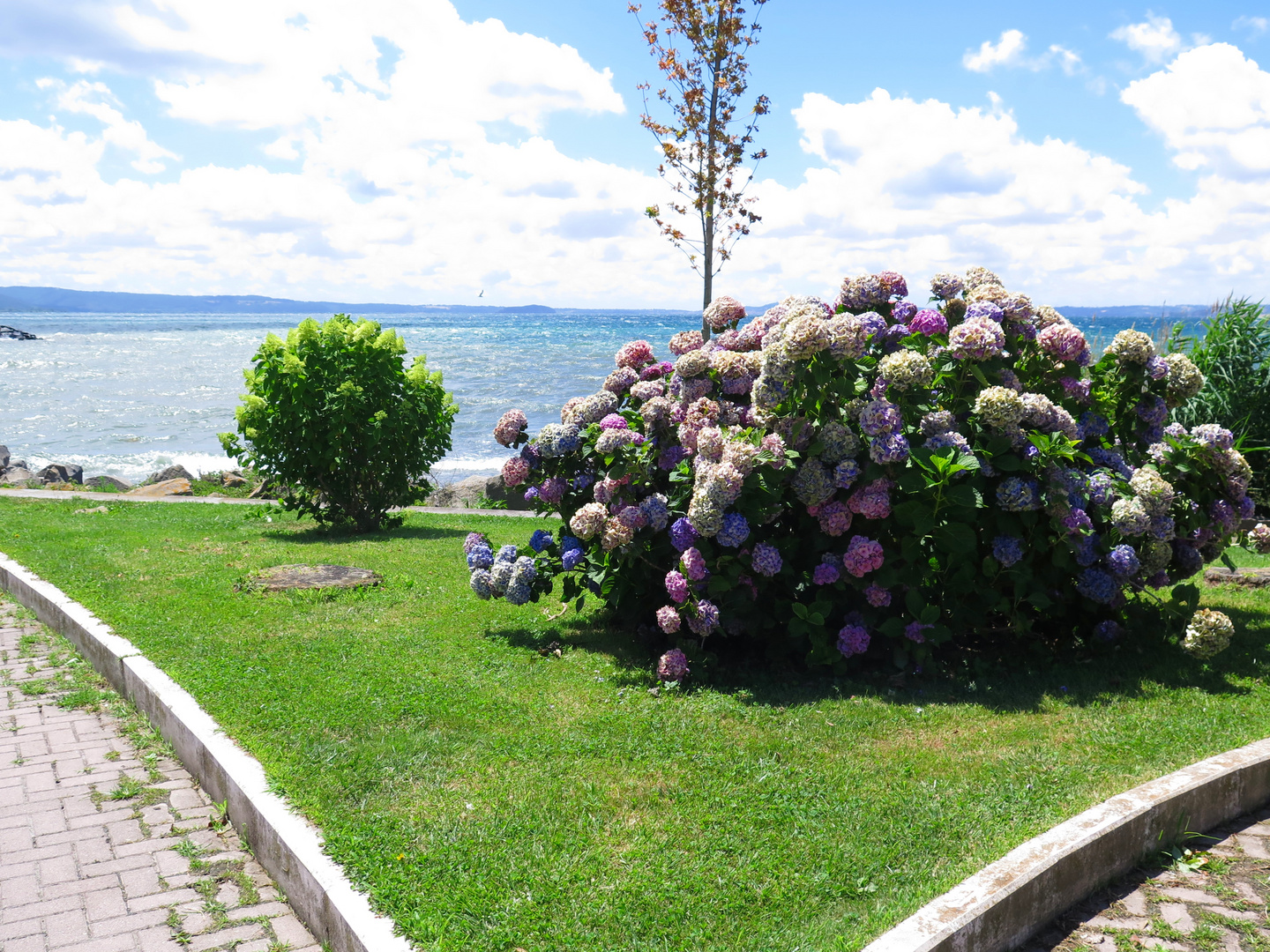 flowers at Bolsena lake