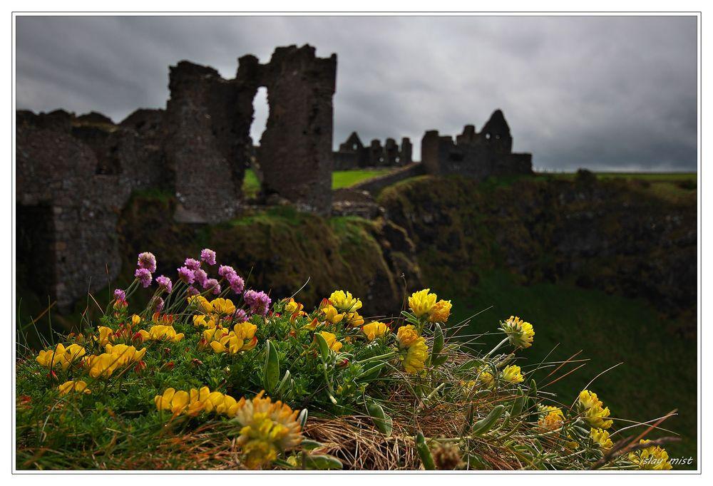 * Flowers at Dunluce Castle *