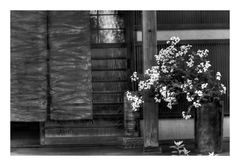 Flowers at storefront [B&W]