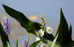 .flowers by the lake.