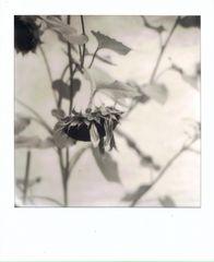 flower's end