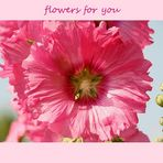 *flowers for you*