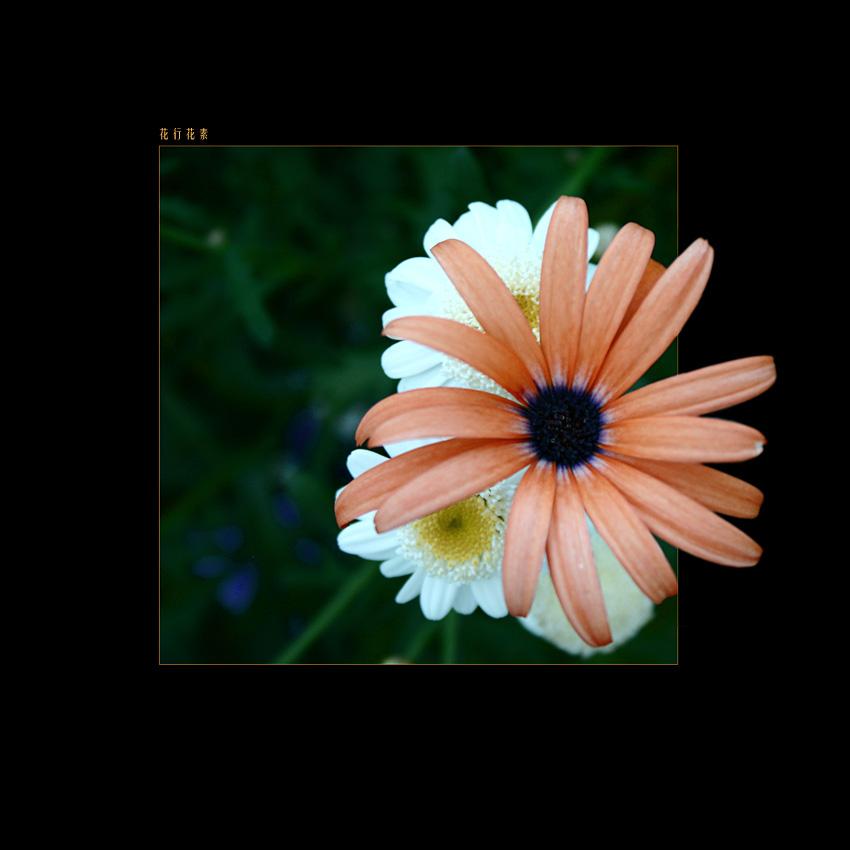 flowers form flowers do IV