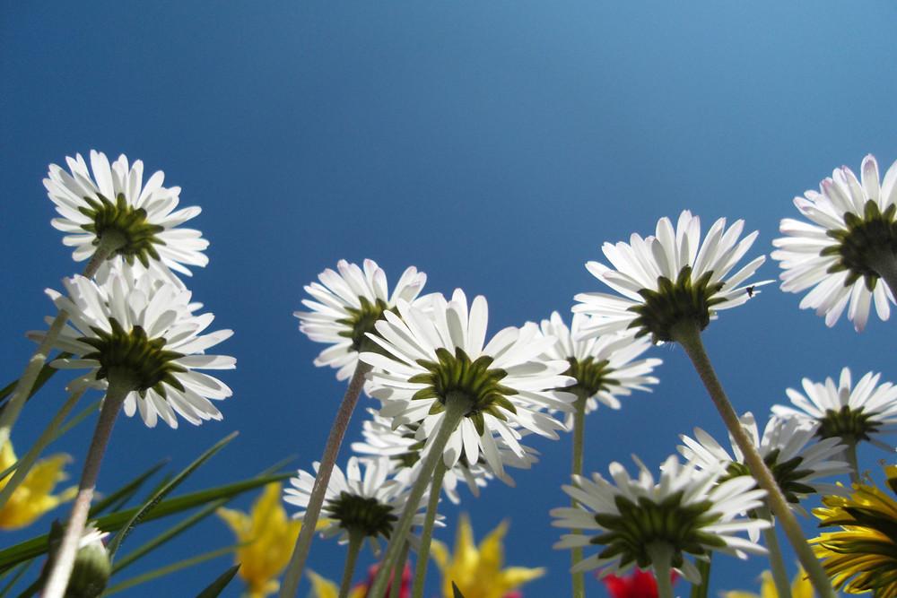 flowers from below