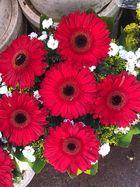 flowers gerberas