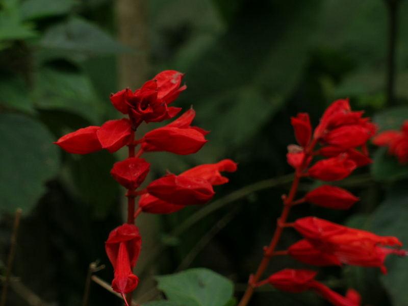 Flowers in Botanic Garden, Obera, Argentina
