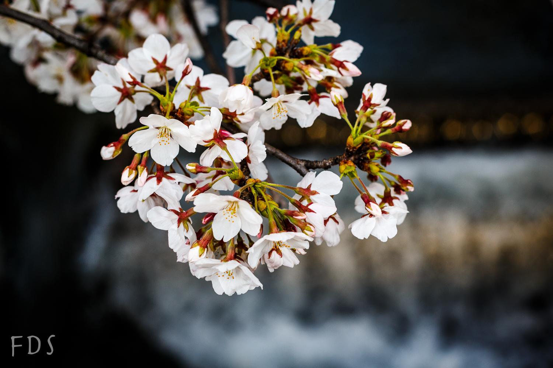 Flowers in Kioto
