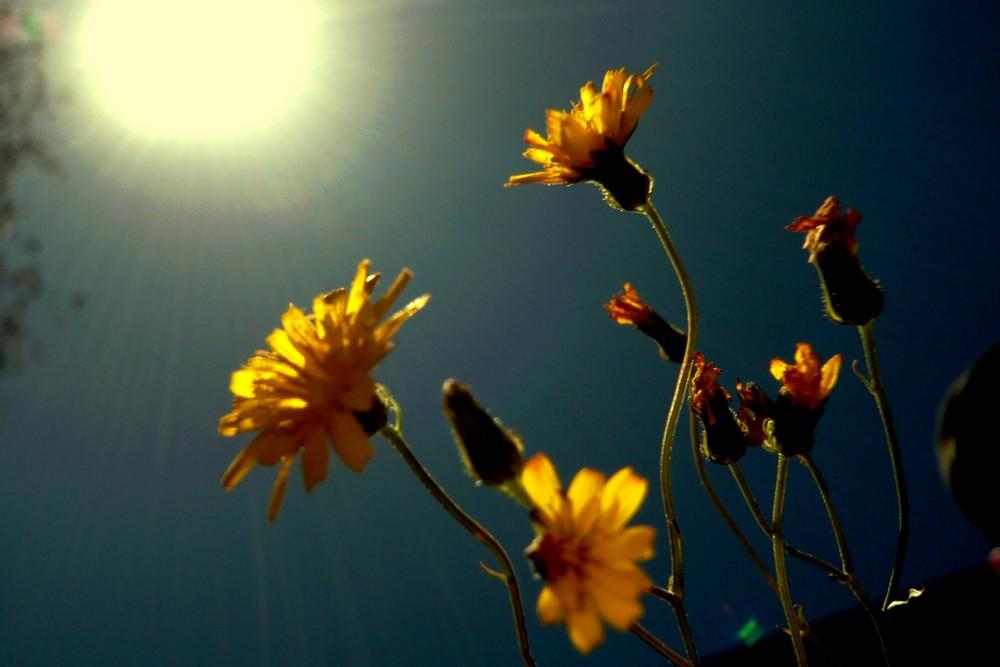 flowers in my garden III
