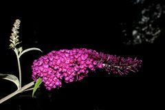 Flowers in the Darkness II
