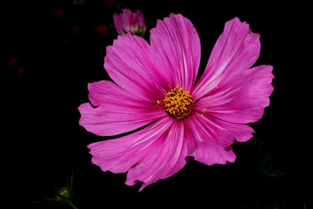 Flowers in the Darkness III