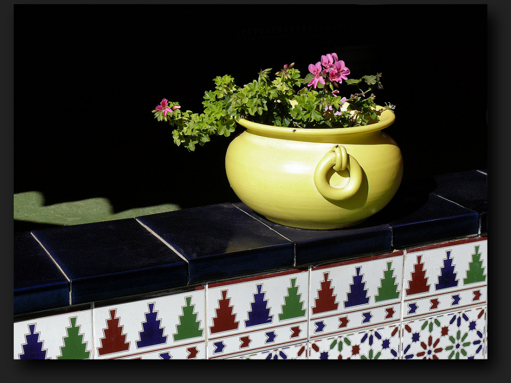 Flowers in yellow pot