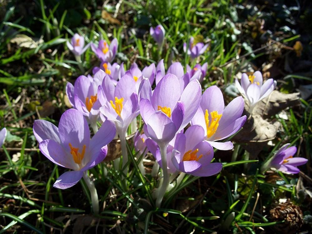 Flowers-Kwiaty