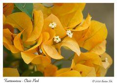 Flowers - Oasis Park Fuerteventura