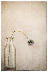 Flowers of Garden VI