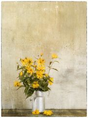 Flowers of Garden XIII