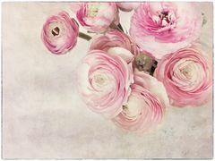 Flowers of Garden XVI
