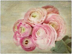 Flowers of Garden XVIII
