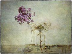 Flowers of Garden XX