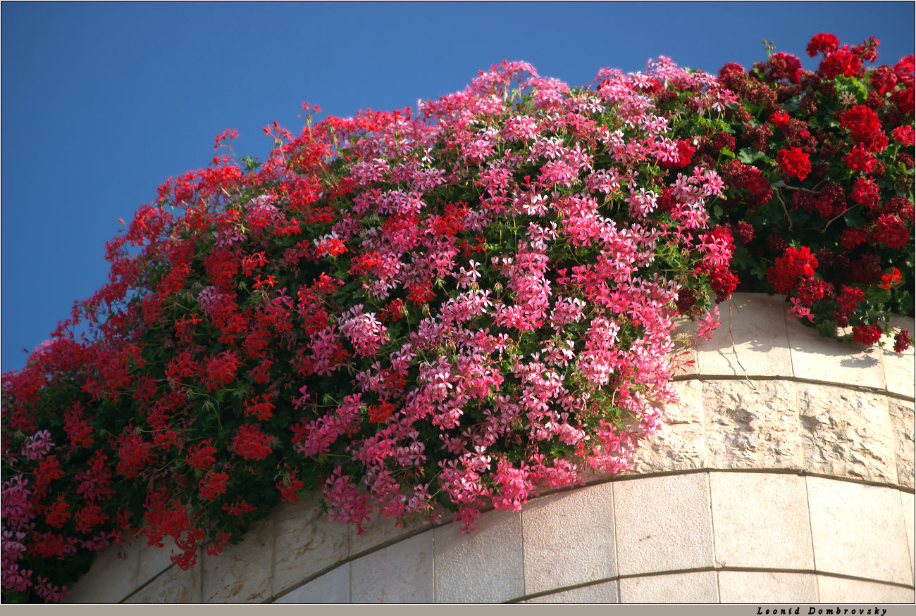 Flowers of the roof