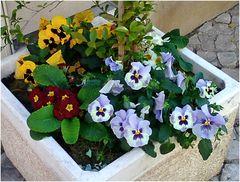 Flowers on neighborhood street where I live